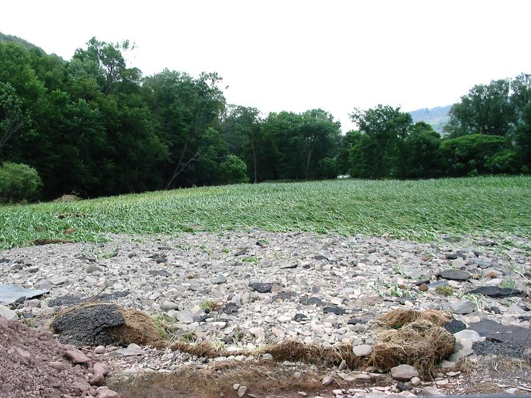 Flood Damaged Cornfield photo