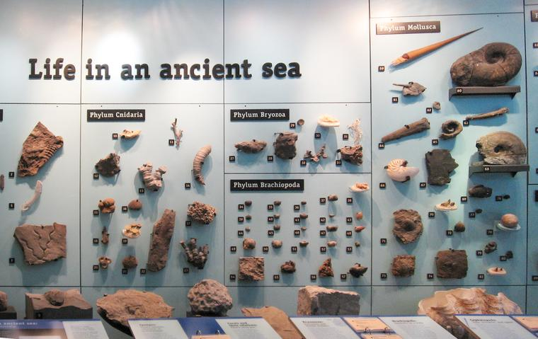 Ancient sea display photo