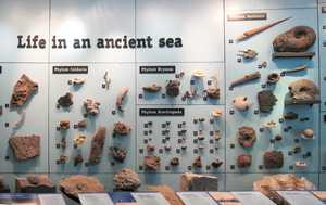 """Ancient sea display"""