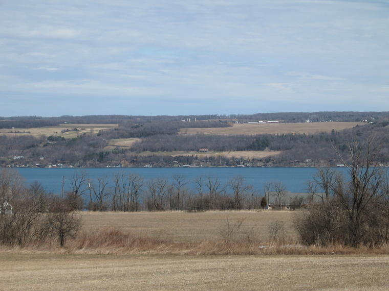 Blue Cayuga photo