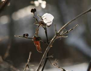 """Twigs and Snow"" image"