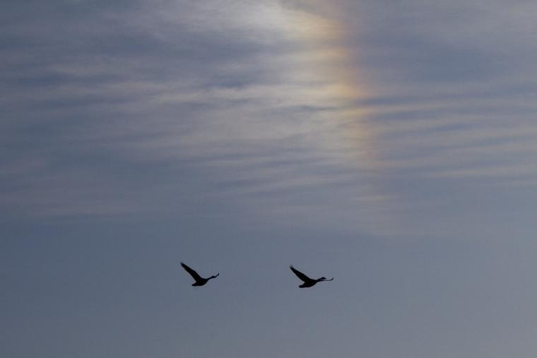 Sundog with Geese photo