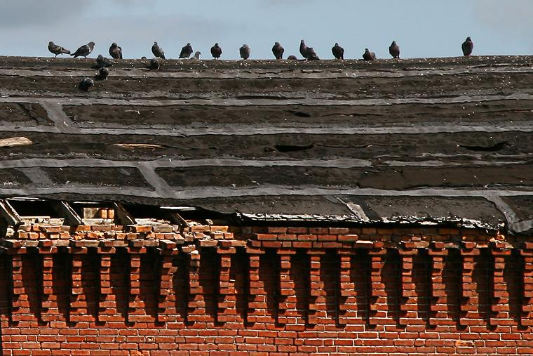 Birds, Bricks, and Roof photo