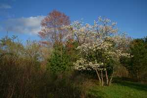 """Spring Trees"" image"