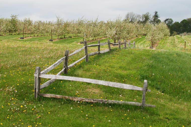 Apple Farm photo