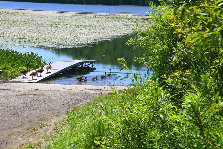 Long Pond Geese photo