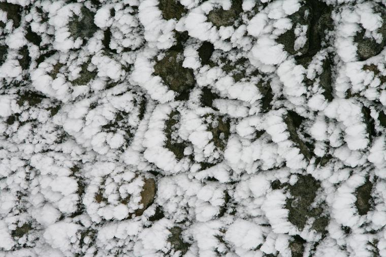 Snowy Wall photo
