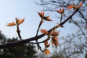 """Spring leaves II"" image"