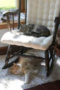 """Kitty Bunk Beds"" image"