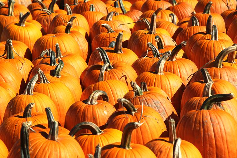 Pumpkins, pumpkins, pumpkins! photo